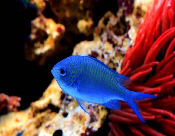 6 cosas sobre la damisela azul