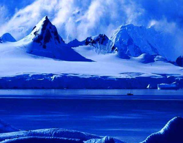 Conoce la fauna de la Antártida