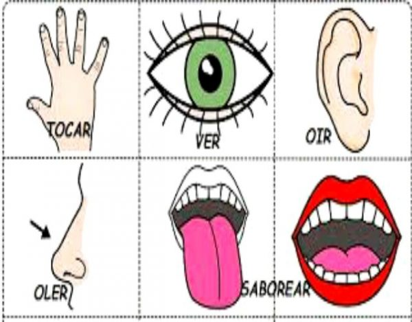Conoce más sobre los sentidos humanos