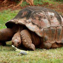 Datos interesantes sobre las tortugas de tierra