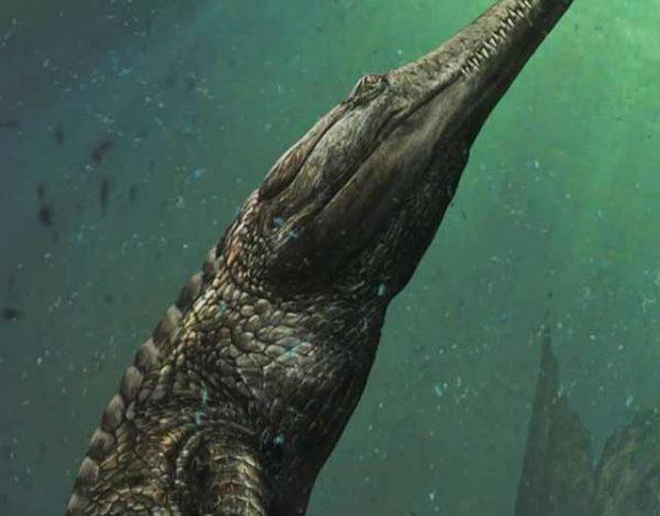 Este es el reptil más grande
