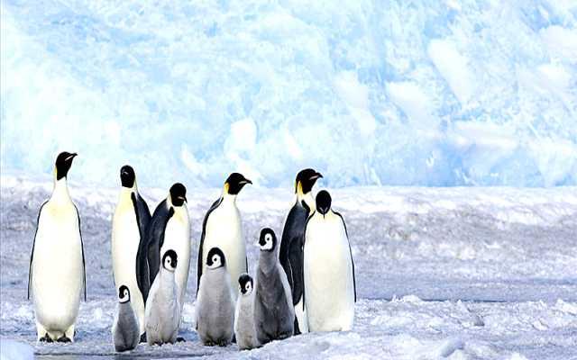 La Antártida era una selva tropical