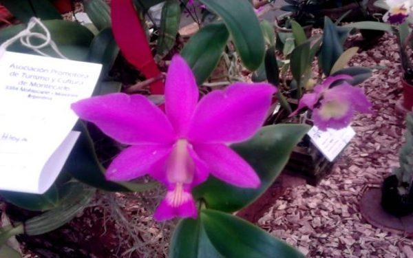 Las 6 flores más raras