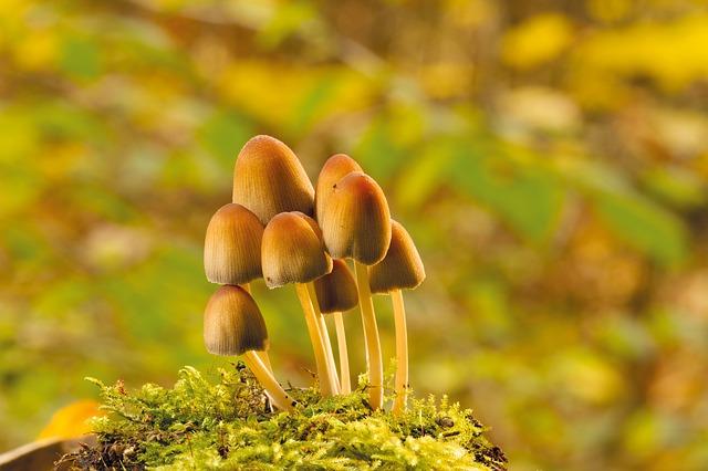 como se alimentan los hongos