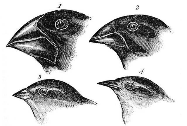 selección natural de darwin