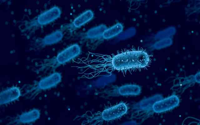 10 datos sobre las bacterias