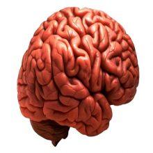 Aprender idiomas es bueno para el cerebro