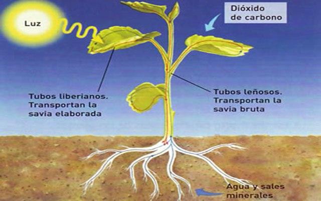 Como se realiza la fotosíntesis
