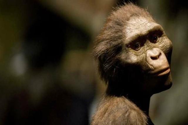 ¿Qué sabemos sobre el homo Australopithecus?