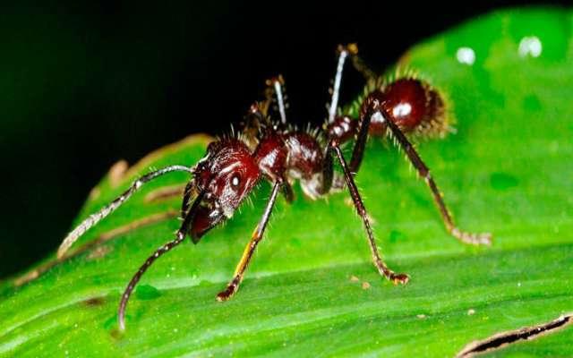 10 insectos más terroríficos