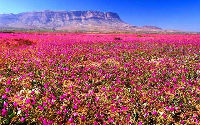 Desierto de las flores Localizado en Atacama (Chile)