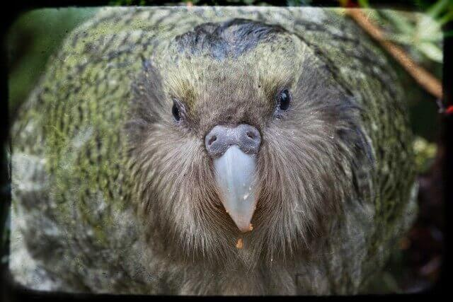 aves más extrañas