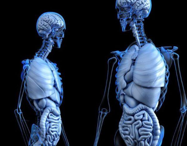 órganos necesarios para vivir