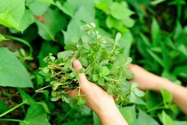 Curiosas adaptaciones de las plantas