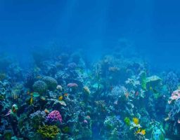7 Curiosidades sobre los océanos