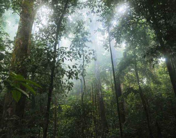 selvas tropicales