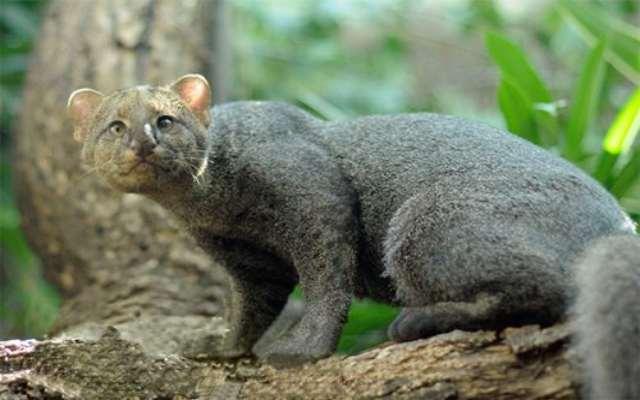 Los animales de Brasil más destacados