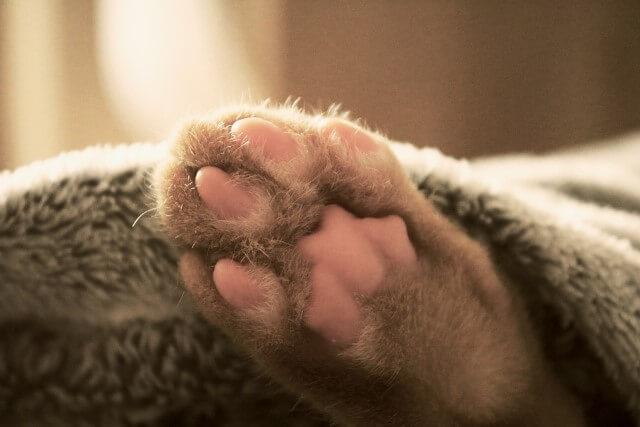 gatos amasan