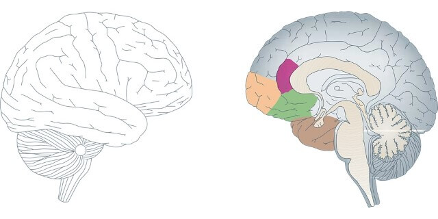 los videojuegos son buenos para el cerebro