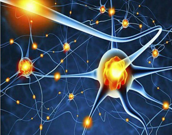 5 Formas de regenerar las neuronas