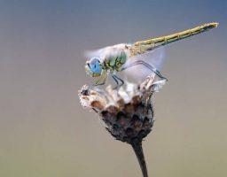 insectos y artrópodos