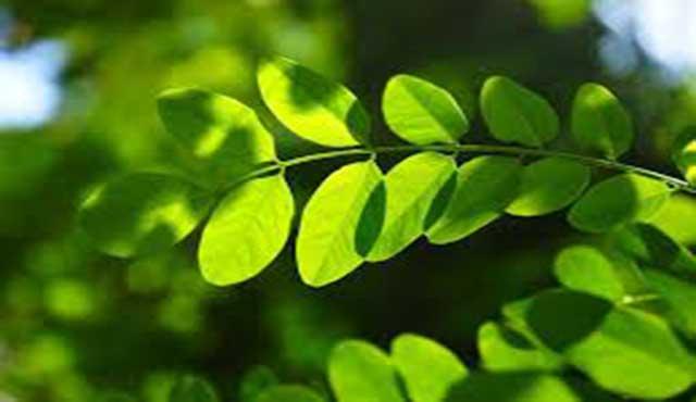 plantas tienen neuronas