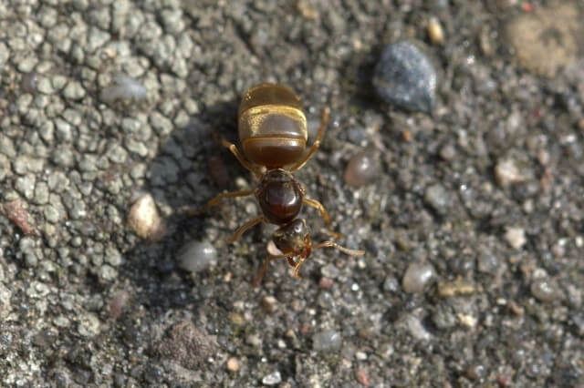 comportamientos de las hormigas
