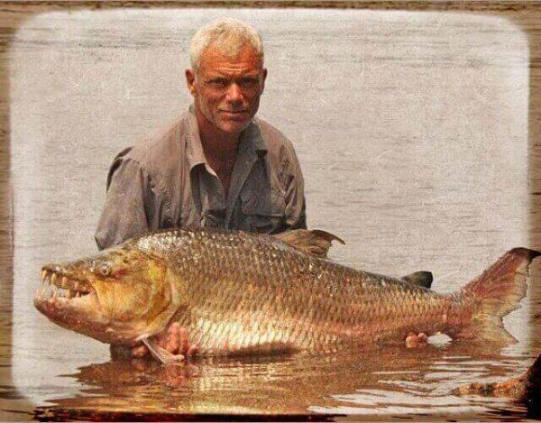 pez tigre Goliath