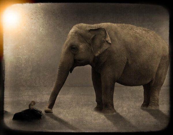 los elefantes tienen miedo a los ratones