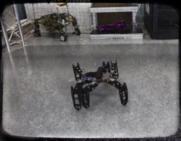 robots con instinto animal