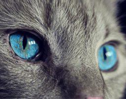 los gatos cuando van a morir