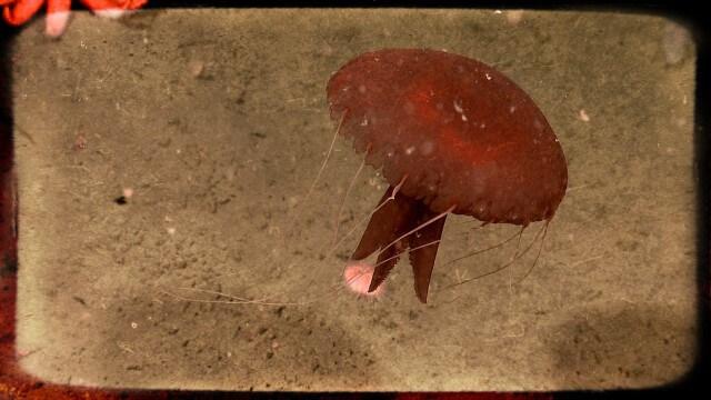 monstruos de las profundidades del océano