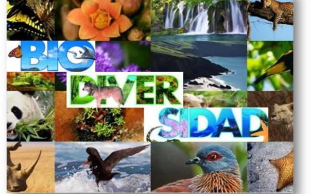 Que es la biodiversidad
