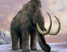 Clonación de mamuts, 'reviven' sus células congeladas