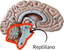 El cerebro reptiliano y las decisiones básicas