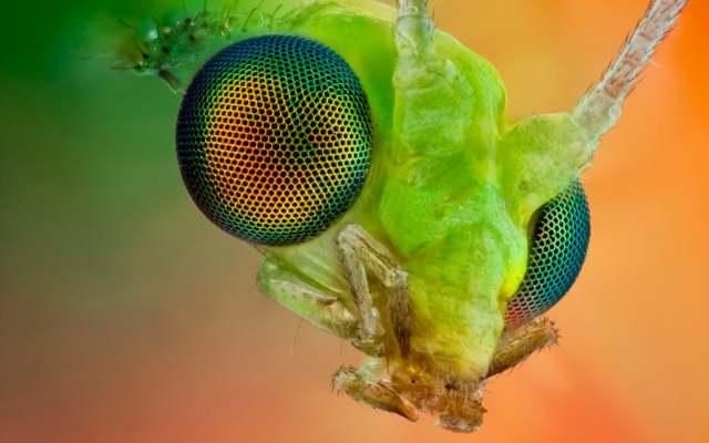 Cómo funcionan los ojos de los insectos
