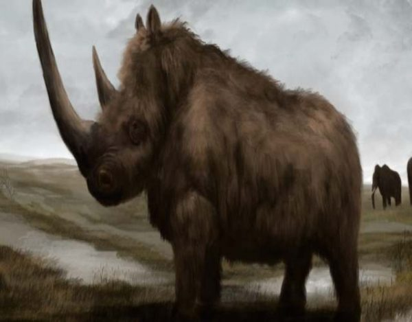 Rinoceronte lanudo, animal extinto