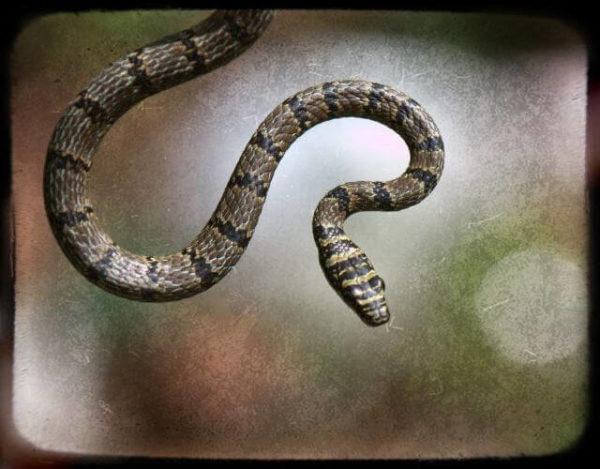 serpientes voladoras