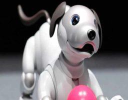 5 motivos para tener un perro robot como mascota