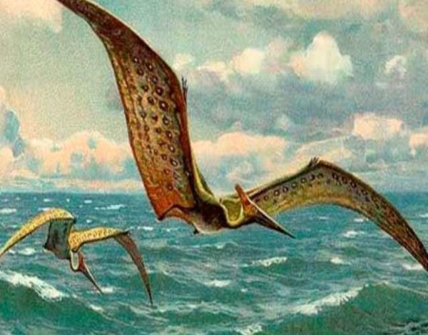 Dinosaurios voladores Cómo eran