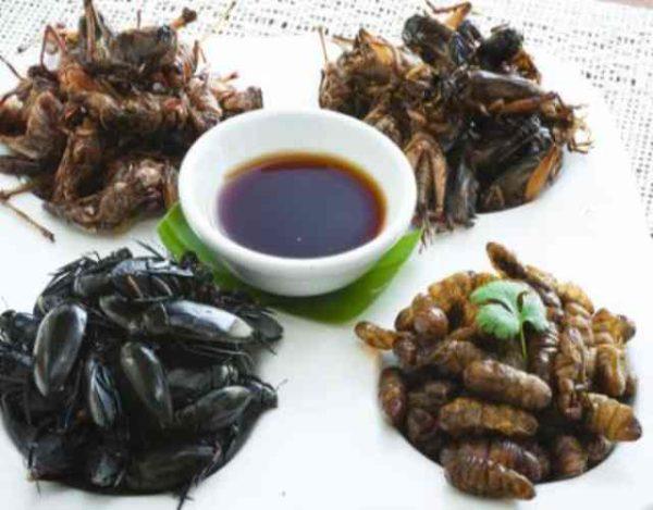 5 especies de insectos comestibles