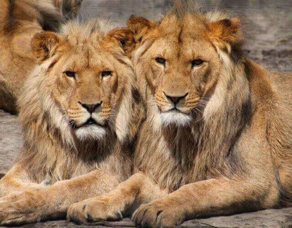 animales homosexuales