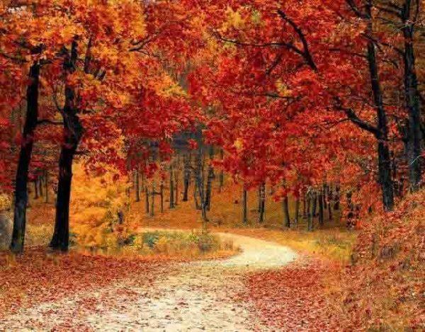cambian las hojas de color