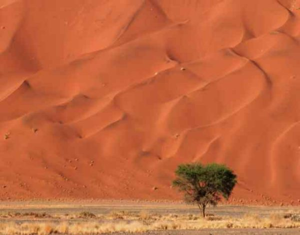 Cómo obtienen agua las plantas del desierto