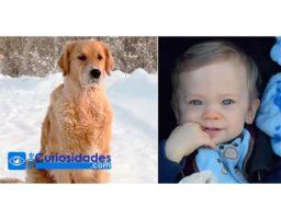 Perro encuentra a un niño abandonado en medio del frio extremo y sabe exactamente que hacer