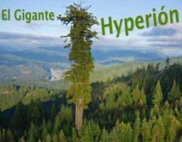 7 árboles más altos del mundo