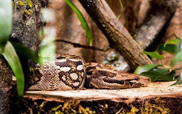 serpiente más grande