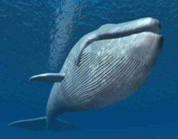 Los 5 mamíferos más grandes del mundo