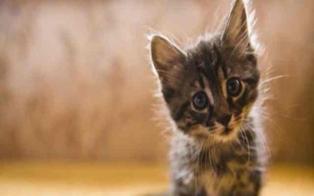 Por qué te ignora tu gato