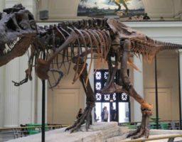 fósiles más importantes del mundo